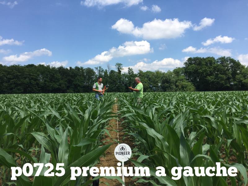 vg-merly-premium2